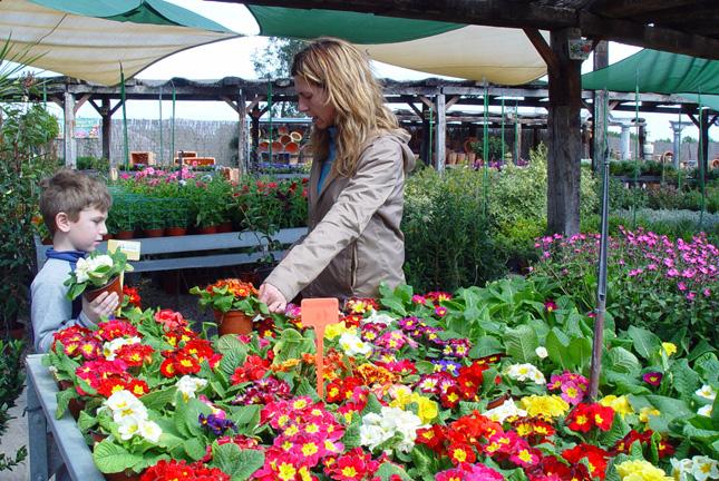 El reino plantae el futuro de los centros de jardiner a - Centros de jardineria madrid ...